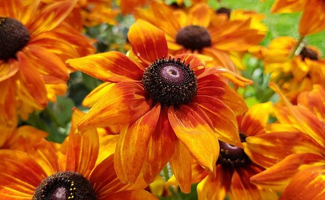 oranžové květiny