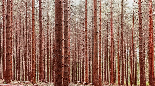 lesní stromy